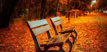 benches-in-autumn-park