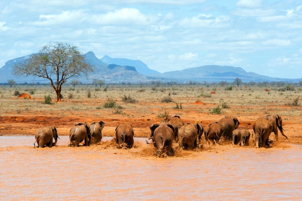 Kenia - Park Narodowy